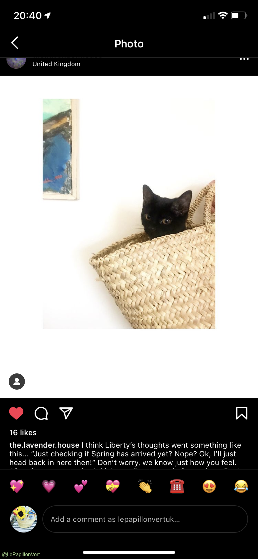Gorgeous black kitty cat in our Rustic Basket (@lavenderhouse)